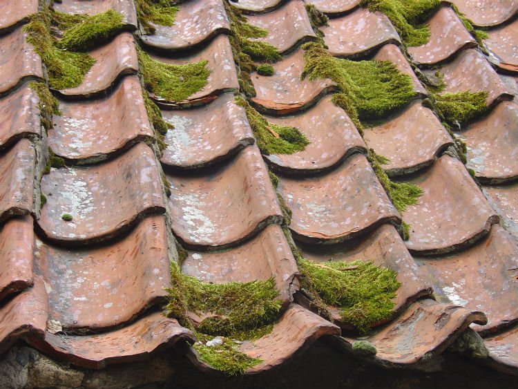 Consolidated Roofing Systems - Moss on Roof - Roof Cleaning Raleigh Durham Cary NC